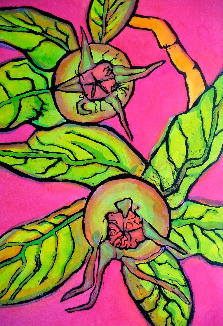 Medlar fruit - ink - Jenny Hill