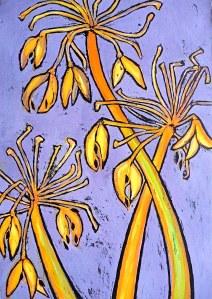 agapanthus seed